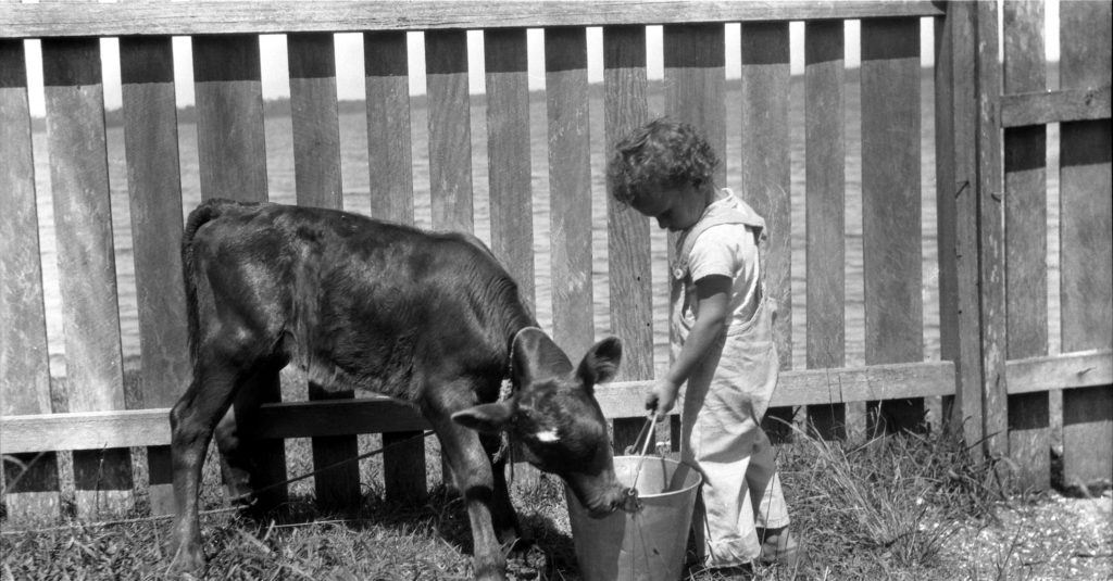Unknown child and calf