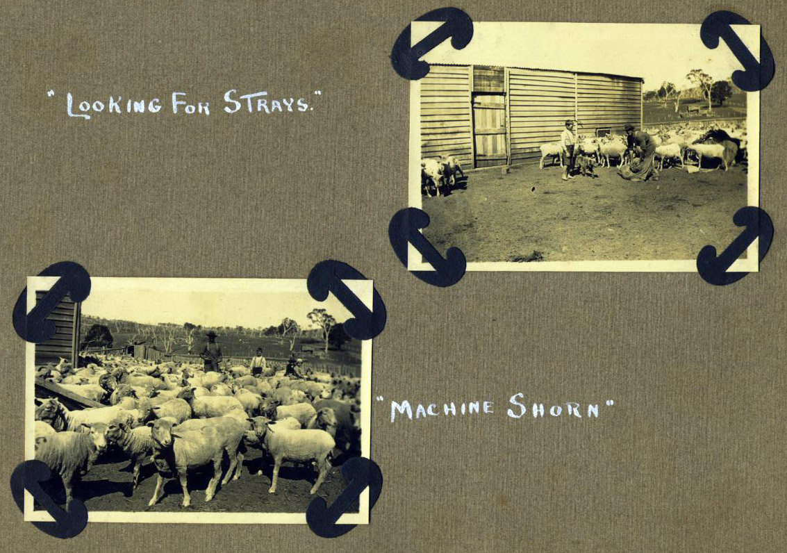 """Machine Shorn"" and ""Looking for strays"""